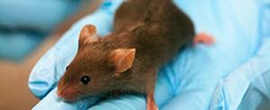 Ciência em Animais de Laboratório - 2021 / 2023