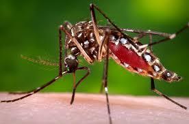 Atualização do Manejo Clínico da Pessoa com Chikungunya