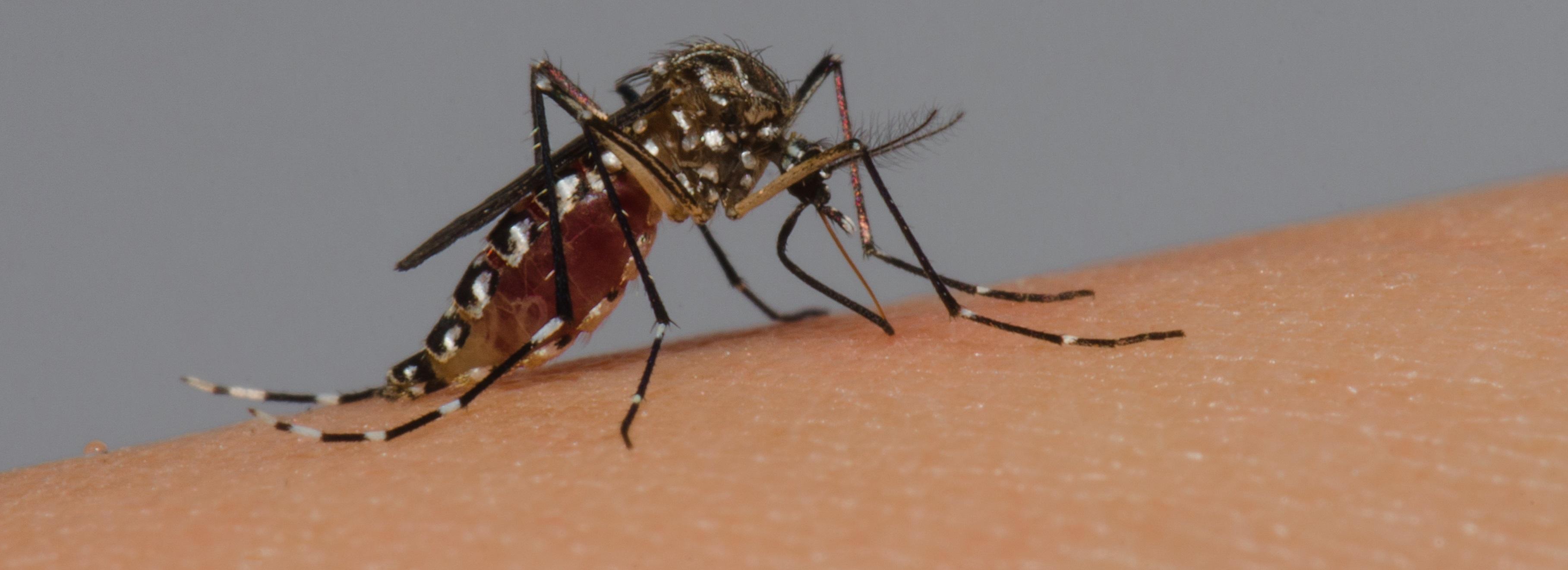 Ecologia das doenças transmitidas por vetores: espacialização, técnicas de captura e identificação