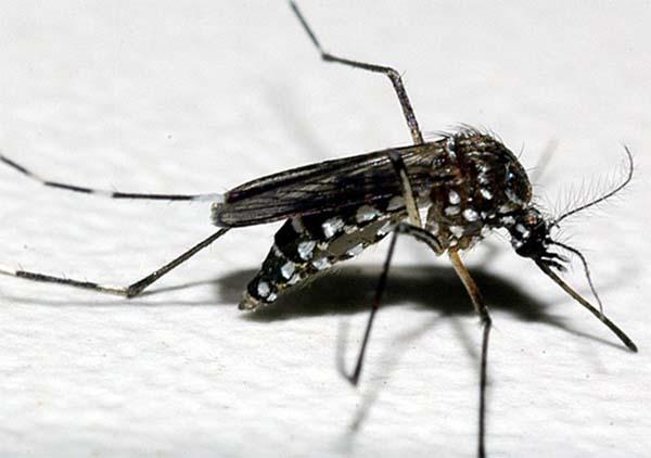 Novo curso da Fiocruz aborda combate a vetores da dengue, zika, chikungunya e febre amarela