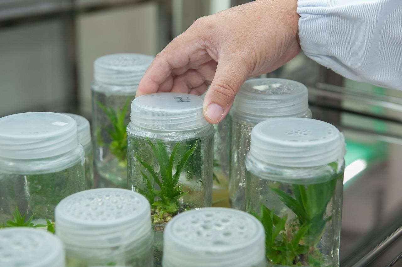 Curso de Especialização em Gestão da Inovação em Medicamentos da Biodiversidade
