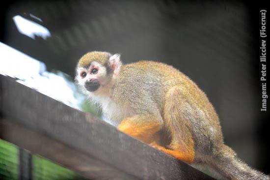 Inscrições abertas para curso de primatas não humanos